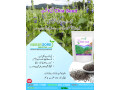 chia-cultivation-seeds-small-1