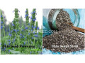 chia-cultivation-seeds-small-0
