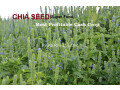 chia-cultivation-seeds-small-4