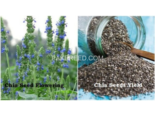 Chia Cultivation Seeds