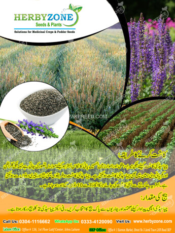 chia-cultivation-seeds-big-2