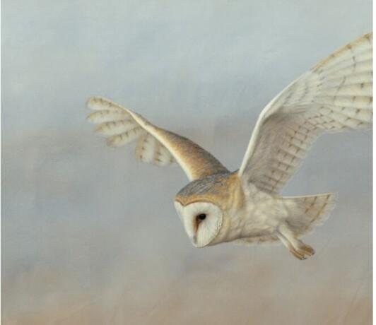 golden-grey-big-owl-big-0