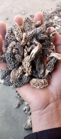 dry-mushrooms-big-2