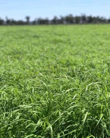 rohds-grass-big-3