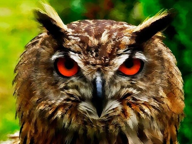 eagle-owl-big-2