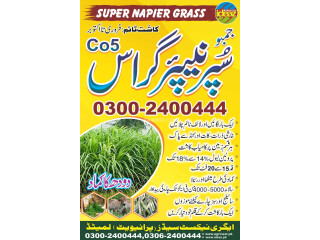 Super nepier grass co5