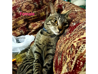 Stray cats/kittens