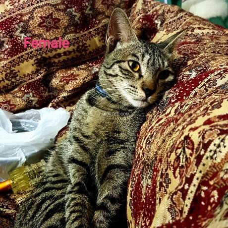 stray-catskittens-big-0