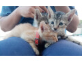 cute-kittens-up-for-adoption-small-1
