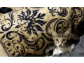 cute-kittens-up-for-adoption-small-2