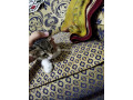cute-kittens-up-for-adoption-small-3