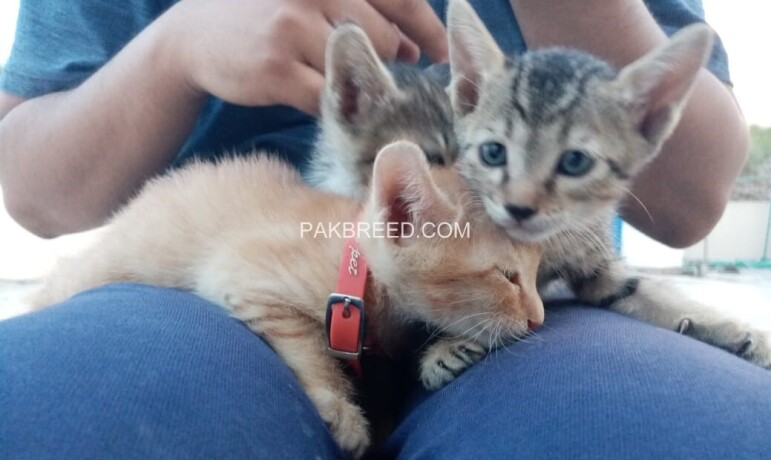cute-kittens-up-for-adoption-big-1
