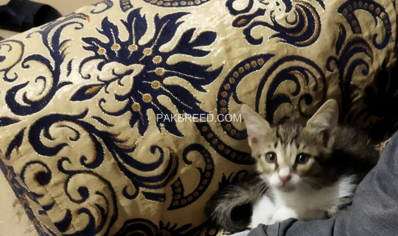cute-kittens-up-for-adoption-big-2