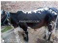 wachi-for-sale-4-dant-contect03067330100-small-3